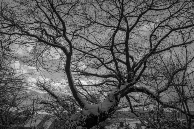Baum // Winter