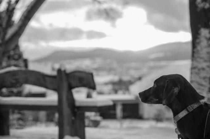 Hund // Winterlandschaft